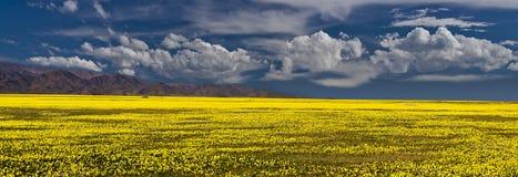 Colore giallo ed azzurro Fotografia Stock