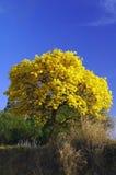 Colore giallo ed azzurro Immagine Stock