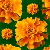 Colore giallo fiorito 1 della priorità bassa Immagini Stock Libere da Diritti