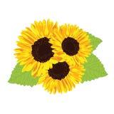 colore giallo floreale dei girasoli del fiore del campo illustrazione vettoriale