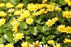 Colore giallo luminoso Fotografie Stock Libere da Diritti