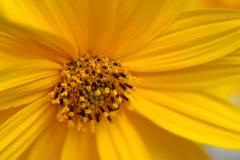 Colore giallo naturale Fotografia Stock