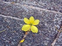 Colore giallo solitario Immagini Stock