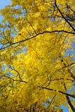 Colore giallo sull'azzurro fotografie stock