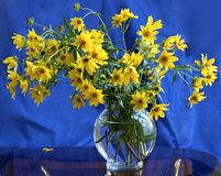 Colore giallo sull'azzurro Fotografia Stock Libera da Diritti