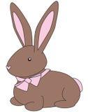 Colore marrone del coniglietto Immagini Stock Libere da Diritti
