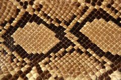 Colore marrone del reticolo della pelle di serpente della priorità bassa Immagini Stock Libere da Diritti