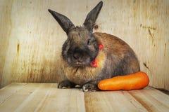 Colore marrone-rosso del coniglio Fotografia Stock Libera da Diritti