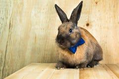 Colore marrone-rosso del coniglio Immagini Stock Libere da Diritti