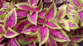 Colore naturale dell'foglie tropicali Fotografia Stock