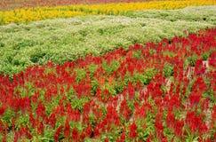 Colore o teste padrão do campo de flor Imagens de Stock