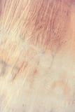Colore pastello morbido del tessuto della tintura del legame Fotografia Stock Libera da Diritti