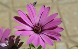 Colore rosa Immagine Stock Libera da Diritti