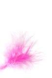 Colore rosa della piuma Immagini Stock
