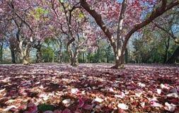 colore rosa di paradiso Fotografia Stock Libera da Diritti