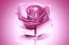 colore rosa di vetro di rosa 3D Fotografie Stock Libere da Diritti