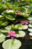Colore rosa e verde Fotografie Stock Libere da Diritti