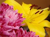 Colore rosa - giglio giallo Immagini Stock Libere da Diritti