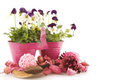 Colore rosa nella primavera Fotografia Stock Libera da Diritti