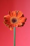 Colore rosso arancione Fotografie Stock