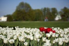 Colore rosso CONTRO bianco Fotografia Stock