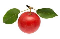 Colore rosso del Apple Immagini Stock Libere da Diritti
