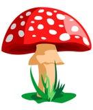 Colore rosso del fungo Fotografia Stock Libera da Diritti