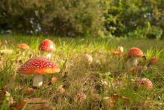 Colore rosso del fungo con i dotts bianchi Immagini Stock Libere da Diritti