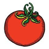 Colore rosso del pomodoro inciso Fotografia Stock