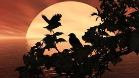 Colore rosso del sole dell'uccello Fotografia Stock