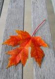 colore rosso dell'acero del foglio di autunno Fotografia Stock Libera da Diritti