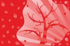 Colore rosso dell'albero Immagini Stock Libere da Diritti