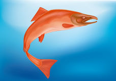 Colore rosso di color salmone Immagini Stock Libere da Diritti