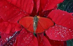 Colore rosso di natale Fotografia Stock Libera da Diritti