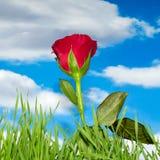 Colore rosso di rosa e nubi Fotografie Stock Libere da Diritti