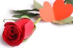 Colore rosso di rosa e scheda Immagini Stock Libere da Diritti