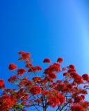 Colore rosso ed azzurro Immagini Stock Libere da Diritti
