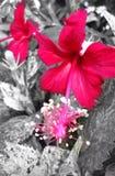Colore rosso ed il nero Fotografia Stock