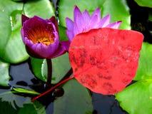 Colore rosso magico Fotografia Stock