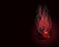 Colore rosso, rosa calda bruciante, su una priorità bassa scura. Fotografia Stock