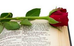 Colore rosso Rosa dello Shakespeare Romeo Juliet immagini stock libere da diritti