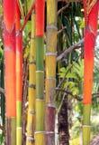 Colore rosso Stunning Fotografia Stock Libera da Diritti
