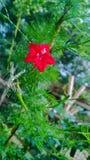 Colore rosso su verde fotografia stock libera da diritti