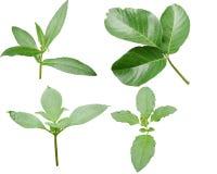 Colore verde del beautifil della natura del fondo della foglia Immagine Stock