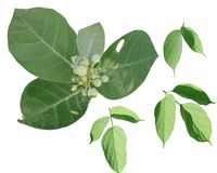 Colore verde del beautifil della natura del fondo della foglia Fotografie Stock Libere da Diritti