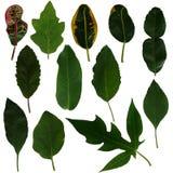 Colore verde del beautifil della natura del fondo della foglia Fotografia Stock Libera da Diritti