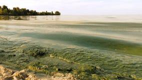 Colore verde dell'acqua contaminata d'alghe della fioritura in lago Fotografia Stock