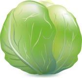 Colore verde di bianco di cavolo, un orto per alimento, cavolo utile saporito dello strato, una pianta da un orto domestico, Fotografie Stock Libere da Diritti