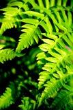 Colore verdeggiante Fotografia Stock