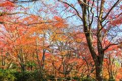 Colore vibrante della natura Fotografia Stock Libera da Diritti